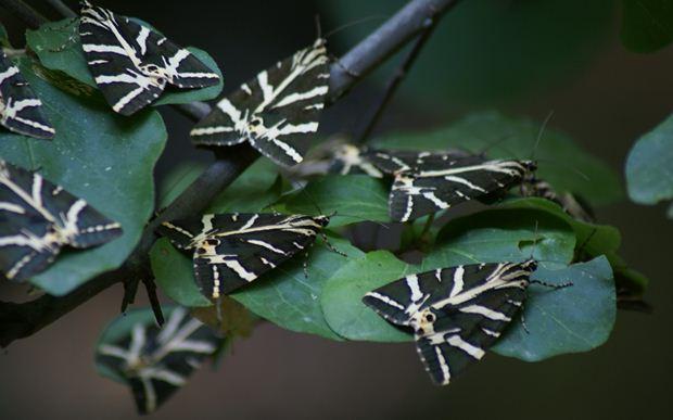 kelebekler-vadisi-kelebekler