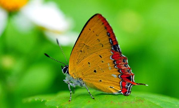 kelebekler-vadisi-konyaya-yilda-1-milyon-turist-cekecek-3937